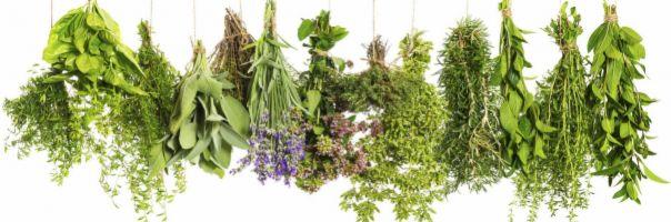 Lékárníci na úzkost z koronaviru doporučují i bylinky