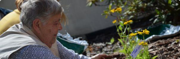 Pacienti s roztroušenou sklerózou zasadili stovky slunečnic