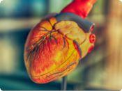 Části pacientů koronavirus poškozuje srdce - prokazují to i zahraniční studie